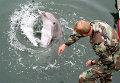 Тренировка боевого дельфина