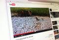 Кадр из видео с барсуком, напавшим на кошку