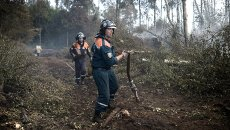 Сотрудники пожарной охраны на месте лесных пожаров в Тверской области