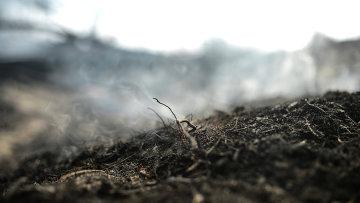 Последствия лесных пожаров. Архивное фото.