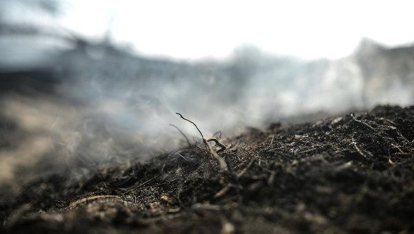 Последствия лесных пожаров в Тверской области. Архивное фото