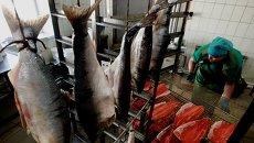 Рабочий в одном из цехов рыбоперерабатывающего предприятия. Архивное фото