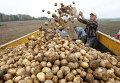 Уборка картофеля в Белоруссии