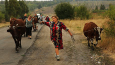 Женщина пасет коров возле Донецка