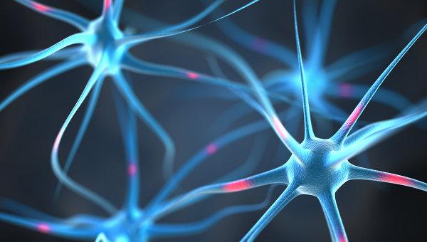 Нейроны. Архивное фото
