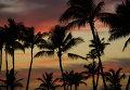 Пальмы на закатном солнце на Гавайских островах