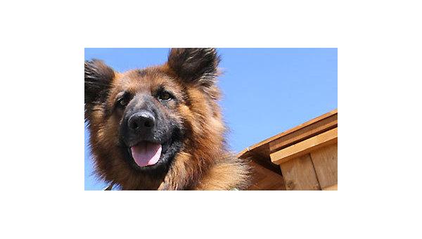 Случаи нападения собак на людей в России в 2008-2009 гг. Справка