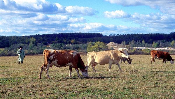 Требования кэкспорту замороженной бескостной говядины изРФ вИран согласованы