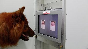 Собака выбирает между добрым и злым лицами