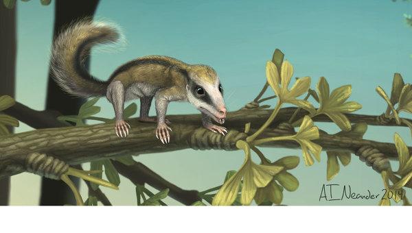 Древнейшее млекопитающее-«белка» крупным планом