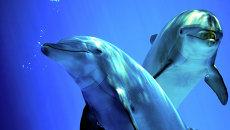Дельфины. Архивное фото