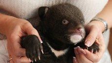 Новорожденный гималайский медвежонок. Архивное фото