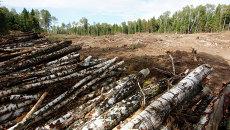 Строительство платной автодороги через Химкинский лес приостановлено
