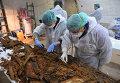 Ученные исследуют останки в мадридском монастыре Тринитариас-Дескальсас св. Ильдефонсо