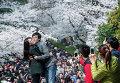 Пара позирует на фоне цветущей сакуры в Ухане, Китай. Март 2015