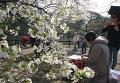 Цветение сакуры в парке Синдзюку-Гёэн в Токио, Япония