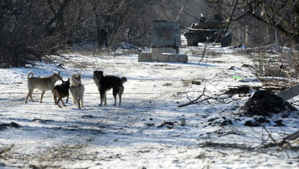 Танк ополченцев Луганской народной республики (ЛНР) на окраине Дебальцева. Архивное фото