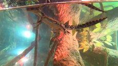 Наследник королевской четы крокодилов учился плавать в аквариуме Дубая