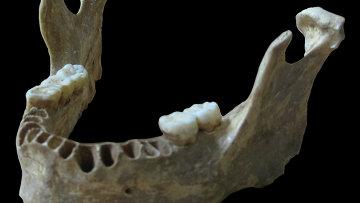 Челюсть из пещеры Оазе, где были найдены останки одного их первых жителей Европы