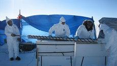 Ученые извлекают образец льдов во время экспедиции на Гренландию