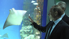Президент РФ В.Путин посетил центр океанографии и морской биологии Москвариум