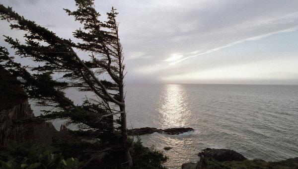 Остров Кунашир в Государственном заповеднике Курильский. Архивное фото
