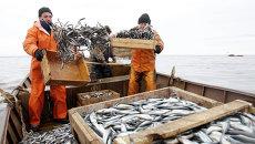 Лов корюшки на Ладожском озере