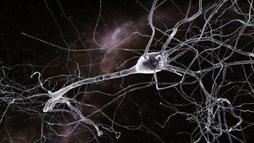 Так художник представил себе нейрон, покрытый опиоидными рецепторами