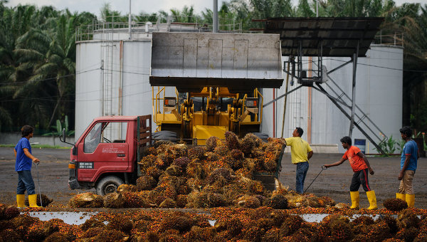 Разгрузка сырья на предприятии по производству пальмового масла. Архивное фото