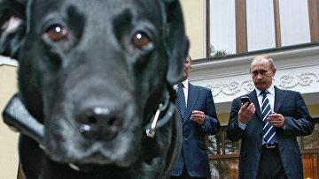 Владимир Путин и лабрадор Кони. Архивное фото