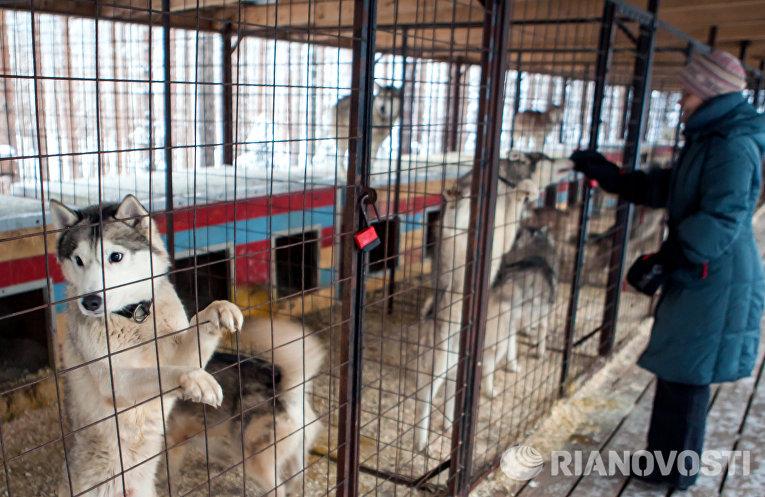 Собачий питомник на территории туристического комплекса Карьяла Парк
