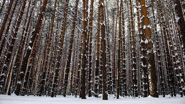 Лес в Омской области. Архивное фото