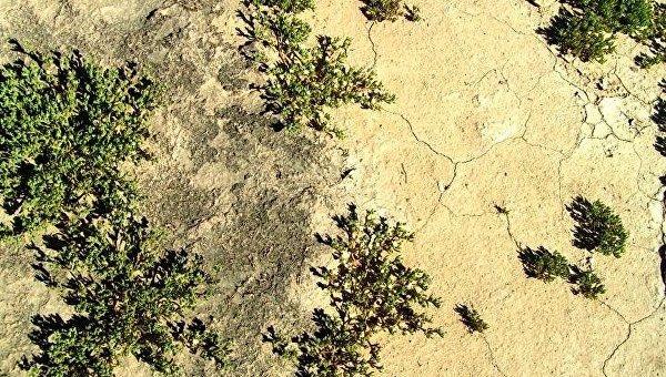 Темные почвы пустынь оказались гигантскими теплицами, созданными бактериями