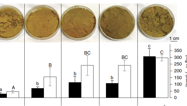 Образцы почв (сверху) и содержание хлорофилла (снизу) в них