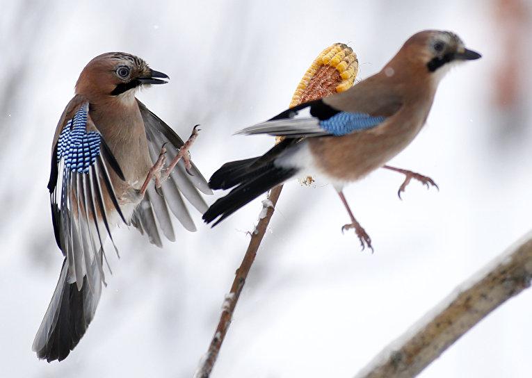 Птицы у кормушки на окраине Минска