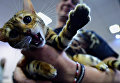 Бенгальский кот с его владельцем на международной выставке кошек в Будапеште