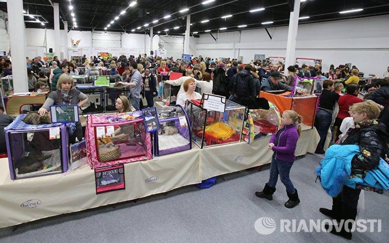 Посетители и хозяева на выставке кошек и котов День влюбленных котов в КВЦ Сокольники