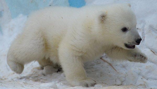 Медвежонок. Архивное фото