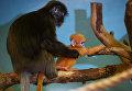 Самка очкового лангура с недавно родившимся детенышем в вольере Новосибирского зоопарка
