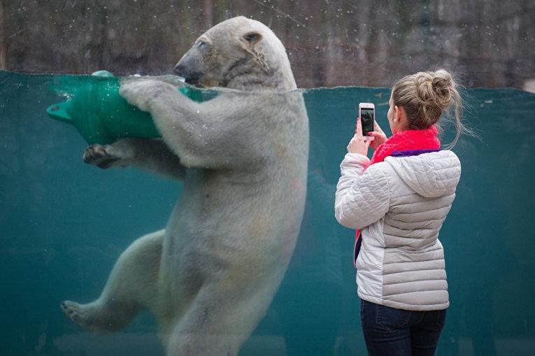 Белый медведь в зоопарке Мюлуза, Франция. 15 марта 2016