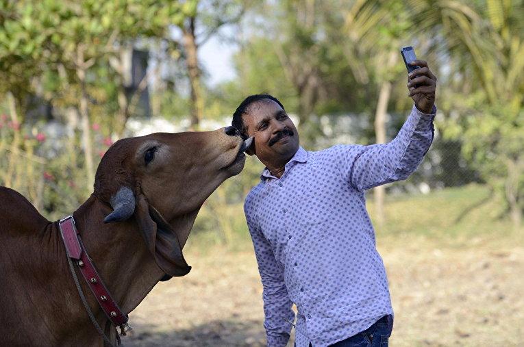 Индус фотографируется со своей коровой по кличке Пунам, во время ее свадьбы с волом из соседнего села, которого зовут Арджун