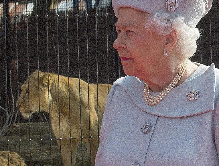 Королева Великобритании Елизавета II у вольера с азиатским львом в лондонском зоопарке