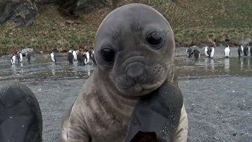 Маленький тюлень нашел друга