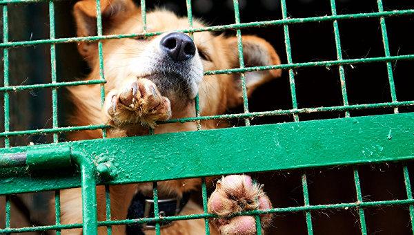 Депутаты предложили приравнять животных к людям