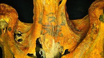 Татуировки на теле древнеегипетской жрицы богини Хатор