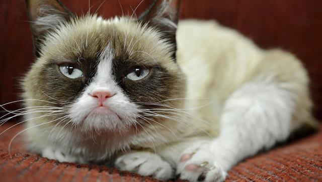 Звезда интернета «Сердитый кот» примет участие вбродвейском мюзикле «Кошки»