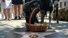 Встреча козла Тимура на ВДНХ и открытие Аллеи Славы на Городской ферме