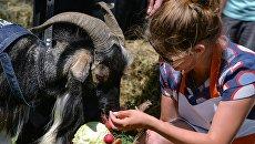 Козел Тимур на открытии Аллеи Славы на Городской ферме на ВДНХ в Москве