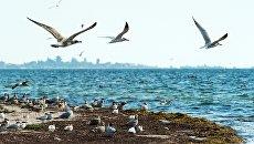 Птицы в природном заповеднике Лебяжьи острова в Крыму