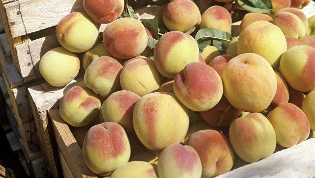На Кубани запустили фруктохранилище стоимостью 600 миллионов рублей